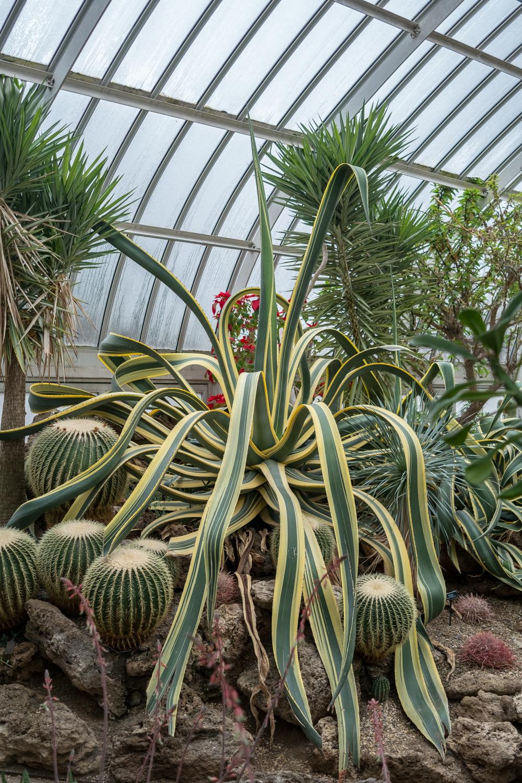 American Century Plant (1 of 2).jpg