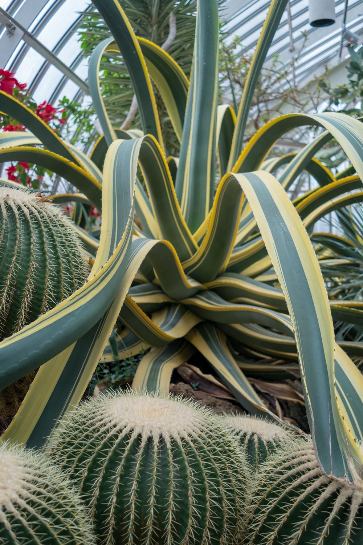 American Century Plant (2 of 2).jpg