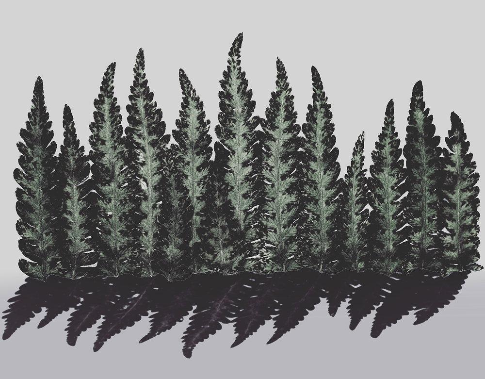 fern_forest__glover.jpg