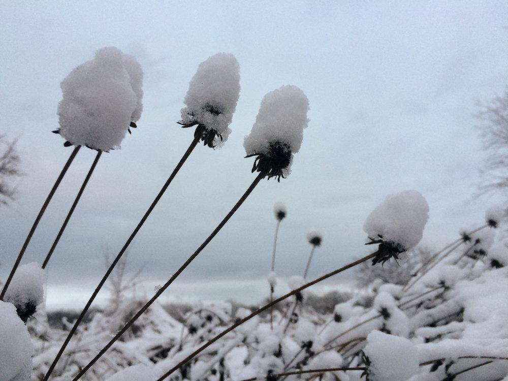 Winter Solstice Snowfall (1 of 3).jpg