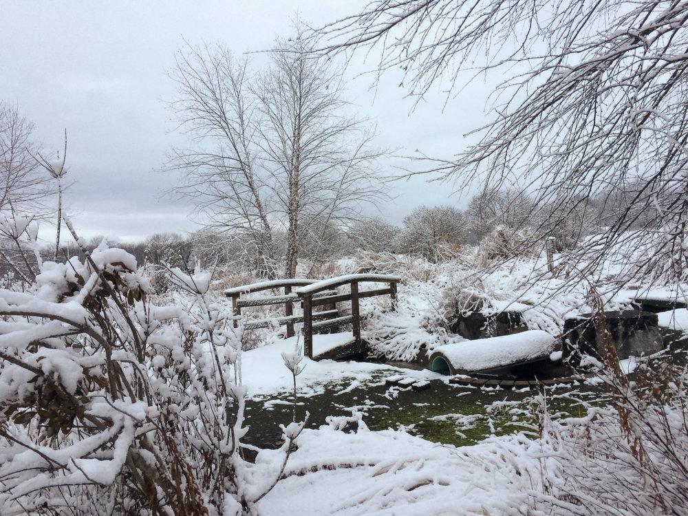 Winter Solstice Snowfall (2 of 3).jpg