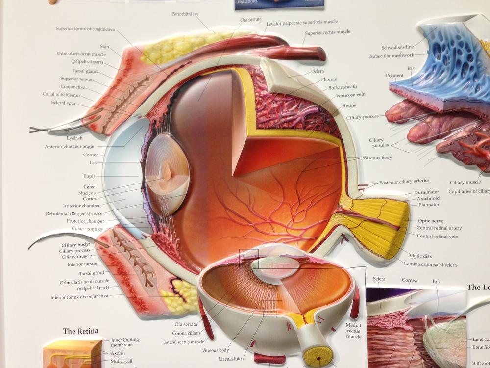 Eye Examinations — Dr. Richard Joyce & Dr. Geoffrey Sampson ...