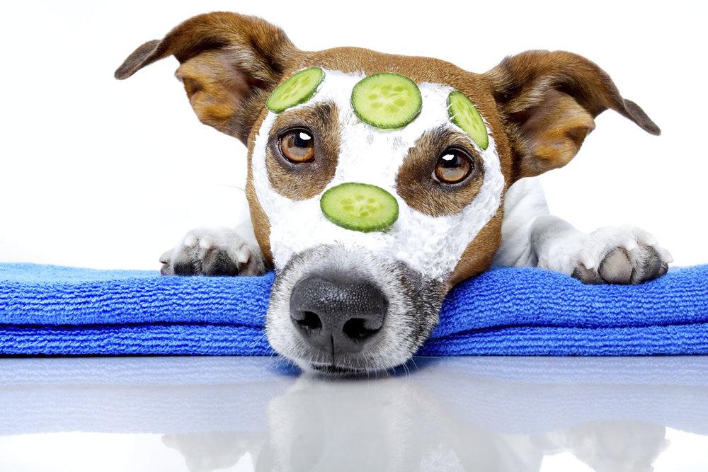 nashville dog grooming