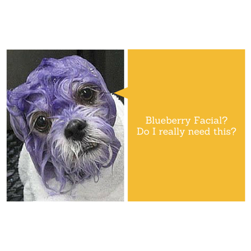 blueberry facial dog
