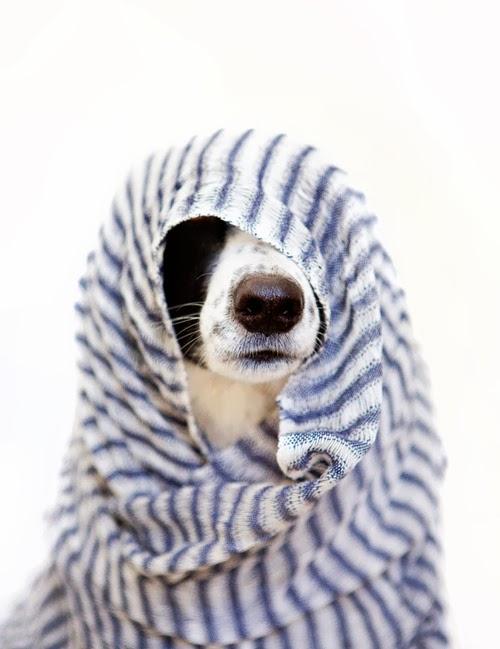 dog wash grooming nashville