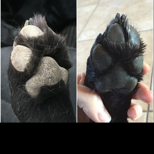 paw pad care