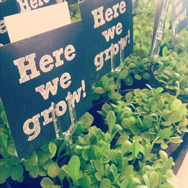 Lettuce. #agritopia #fieldkitchen #herewegrow
