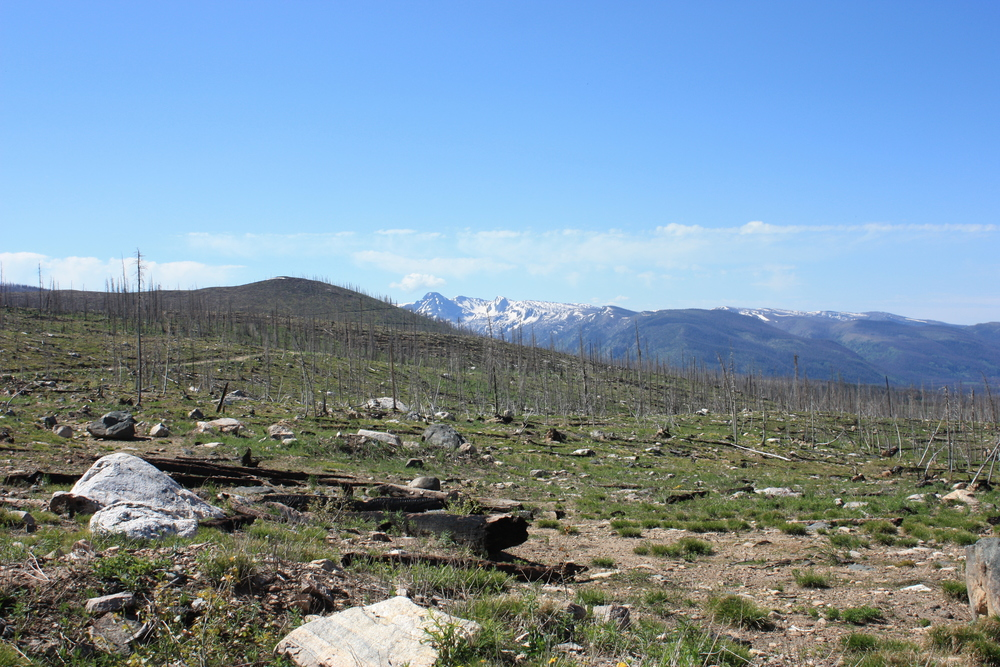 Blowndown, logged, and burned forest in Colorado