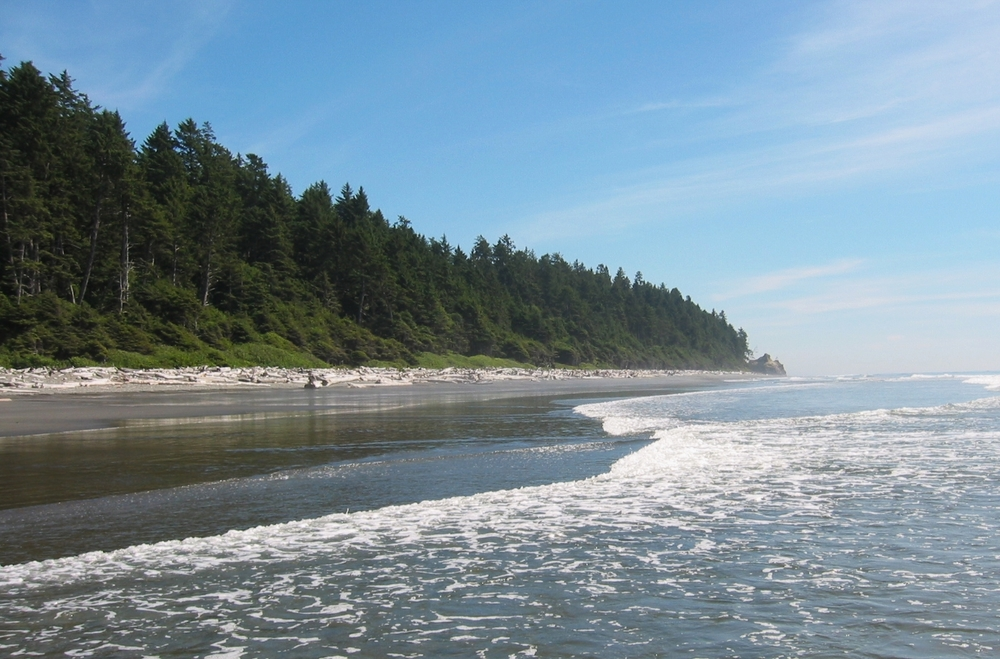 Coastal rainforest along the Olympic coast in Washington State