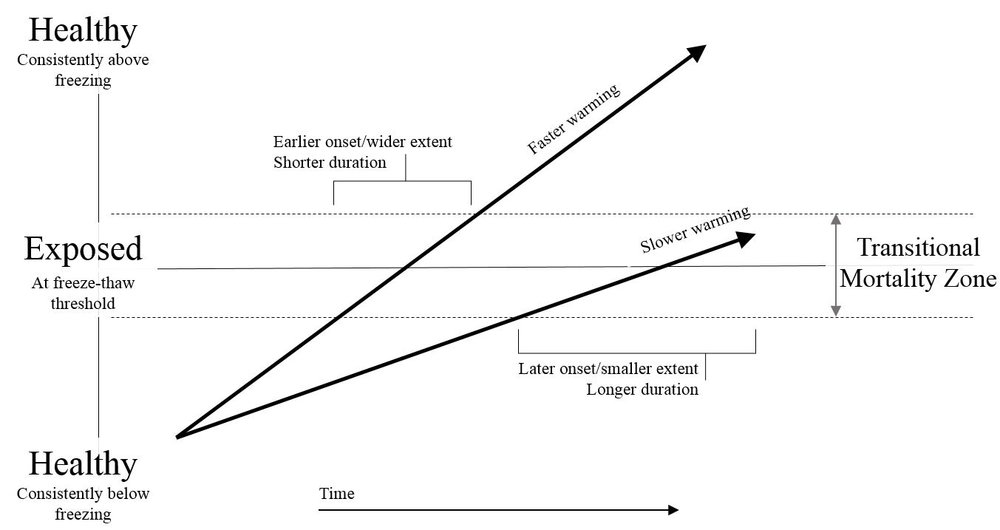 "The transitional mortality zone hypothesis, which states that increased variability around a specific threshold drives mortality - not necessarily the threshold itself - holds up well in test cases.  One implication is that faster climate change may result in less severe mortality because less time is spent in the highly variable, exposed ""danger zone."""