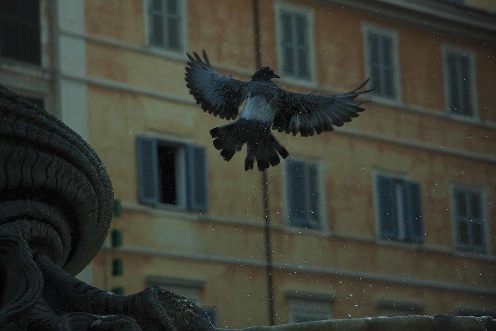 rome_portfolio_3.jpg