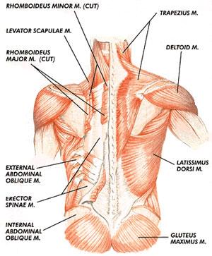 Source:http://timiinengland.wordpress.com/2012/01/03/hard-core-workout/
