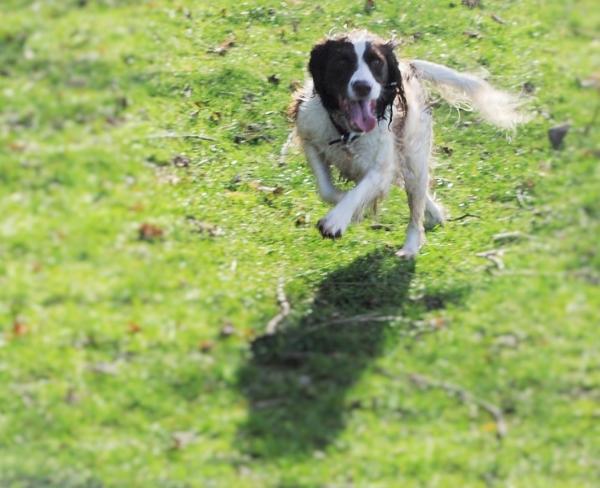 1402 Lola running (3).JPG