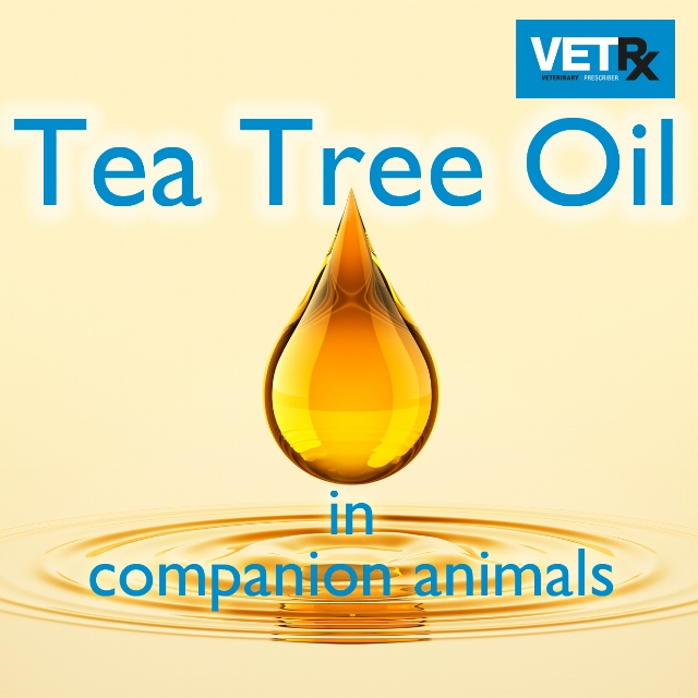 Why you should do this module Tea tree oil is widely advocated as a home remedy for skin infections and for controlling flea infestations. Vets may therefore see animals that have been treated with tea tree oil, or owners might ask for advice about its use. This module sets out the evidence on the benefits and harms of tea tree oil in companion animals, and describes what can be done if tea tree oil has caused harm to a pet.