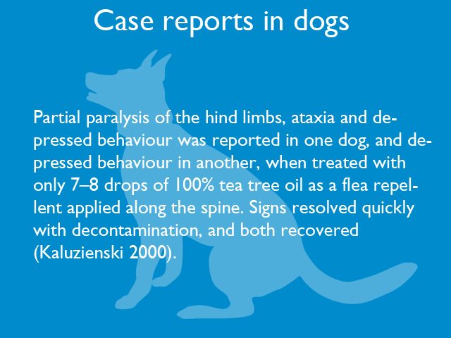 case-reports-in-dogs-02.jpg