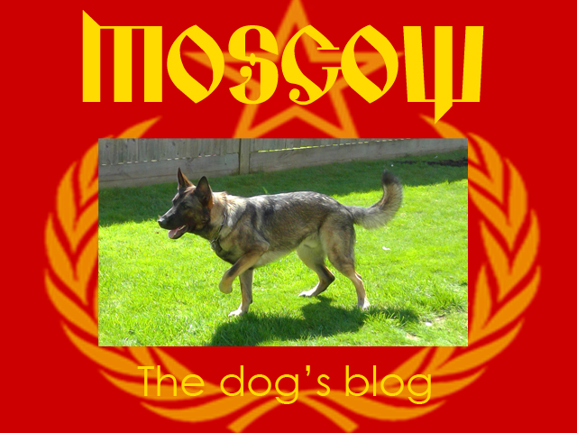 The-dogs-blog.jpg