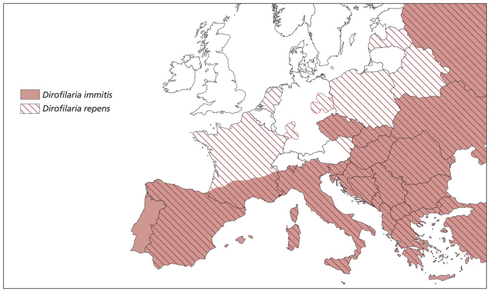 Fig 2. Approximate distribution of  Dirofilaria immitis  and  Dirofilaria repens  in Europe as of 2015 (courtesy of ESCCAP).