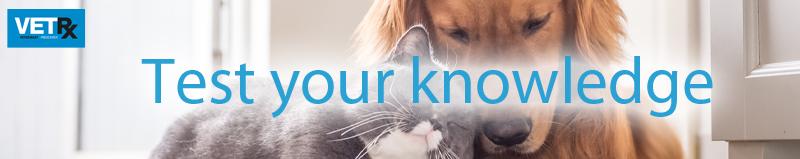 Amantadine-test-your-knowledge-banner.jpg