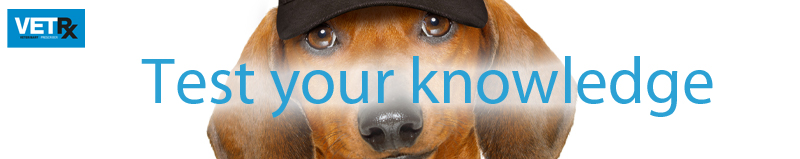 imported-pets-test-your-knowledge-banner.jpg