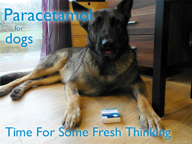 Can I Give My Dog Paracetamol >> The Dog S Blog Paracetamol For Dogs Time For Some Fresh