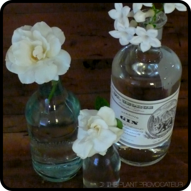 |Rosa sp.|Stephanotis floribunda|Gardenia jasminoides|Upcycled glass bottles|