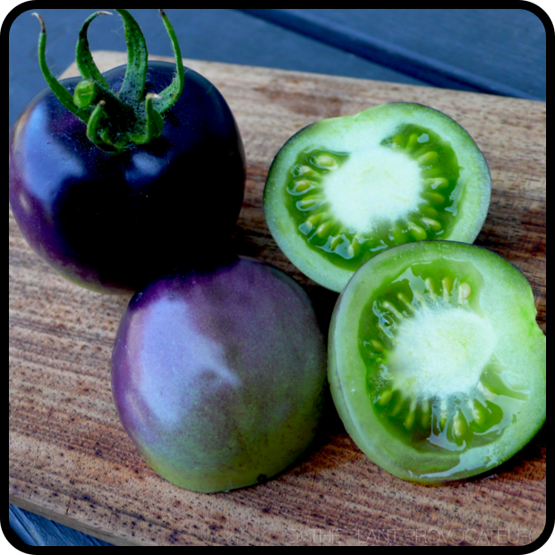 |Tomato 'Bosque Blue' fruit detail|