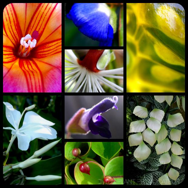 |2014 Flora Montage|