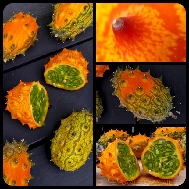 |Cucumis metuliferus fruit + detail|