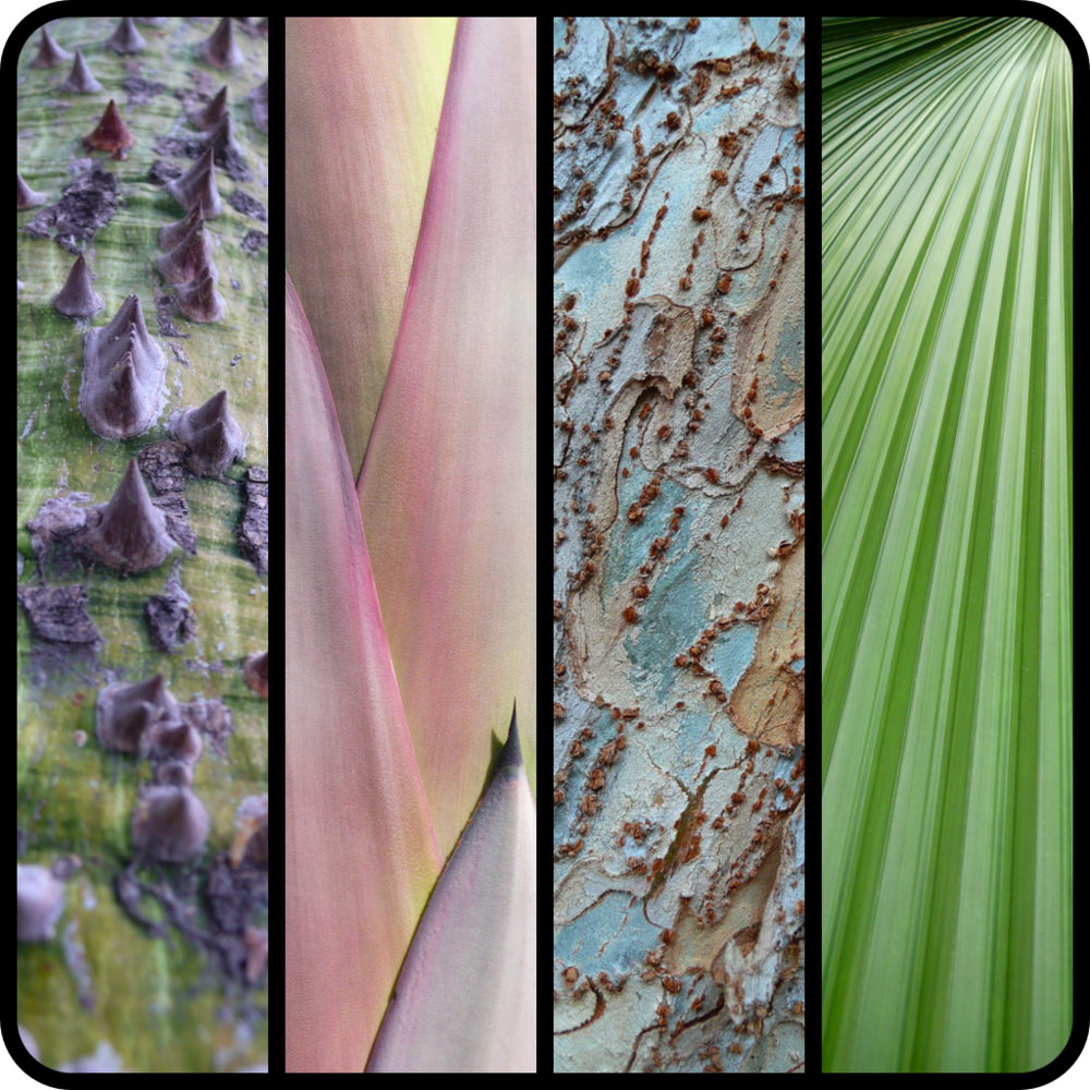 |Chorisia speciosa trunk|Agave sp. leaves|Ulmus parvifolia bark|Palm leaf|