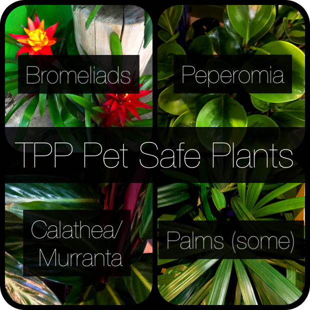 Pet Safe Plants with 4 titles.png