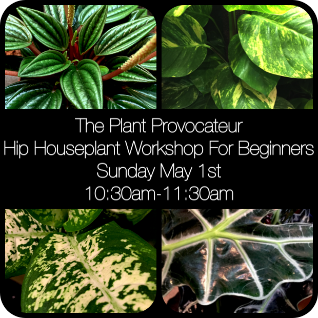 Astounding The Plant Provocateur Hot Houseplants Flowers Gifts Home Remodeling Inspirations Basidirectenergyitoicom