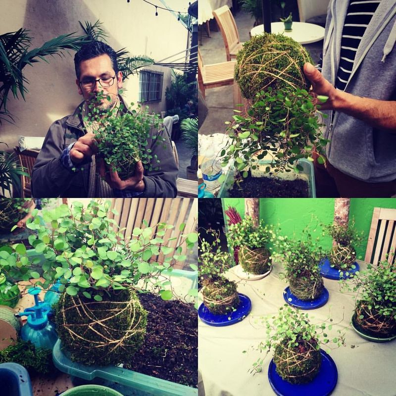 kokedama-workshop-at-the-plant-provocateur-silver-lake