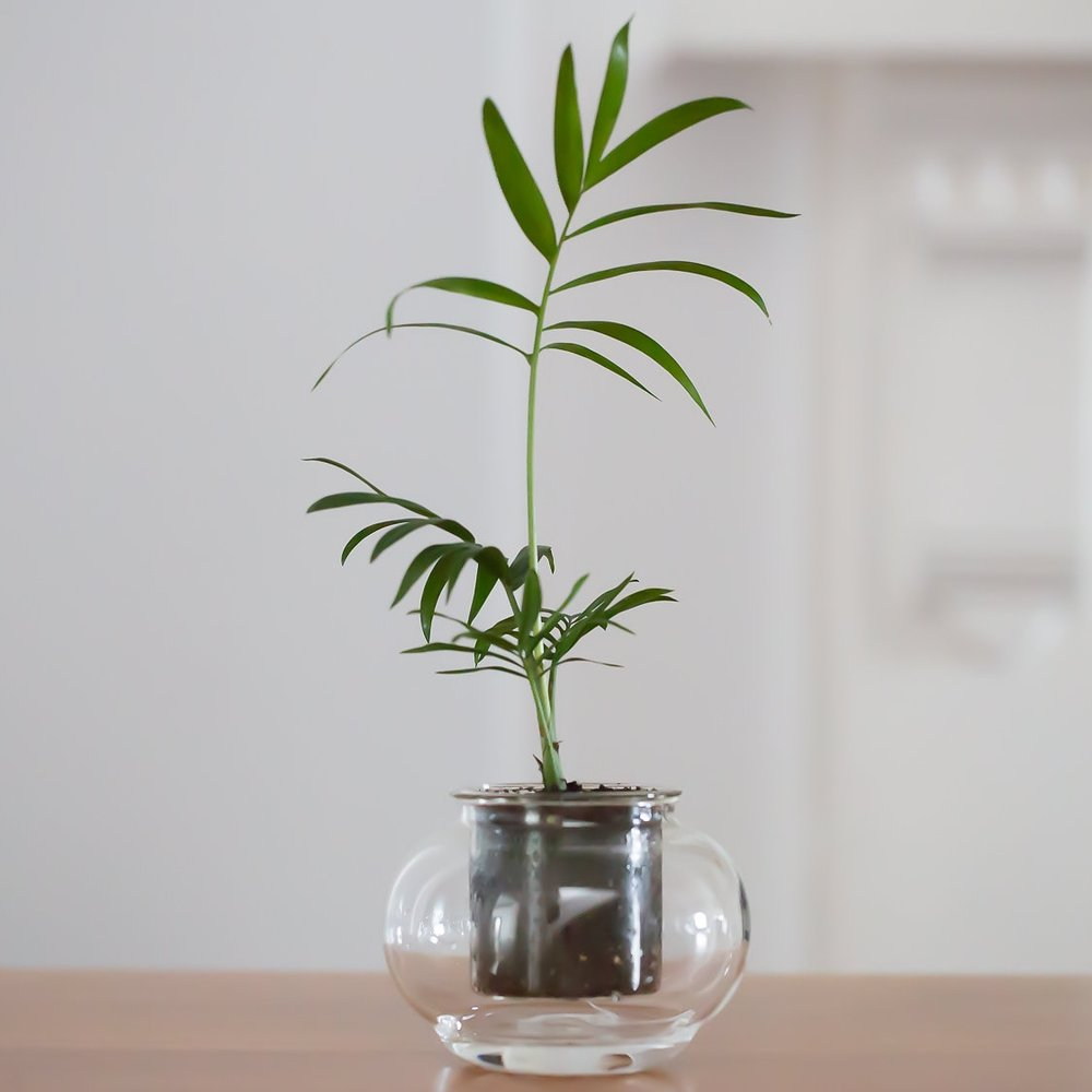 cup-o-flora-corporate-gifts-at-the-plant-provocateur-silver-lake.jpg