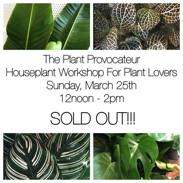 Houseplant Workshop Ad 1.2 SOLDOUT.png