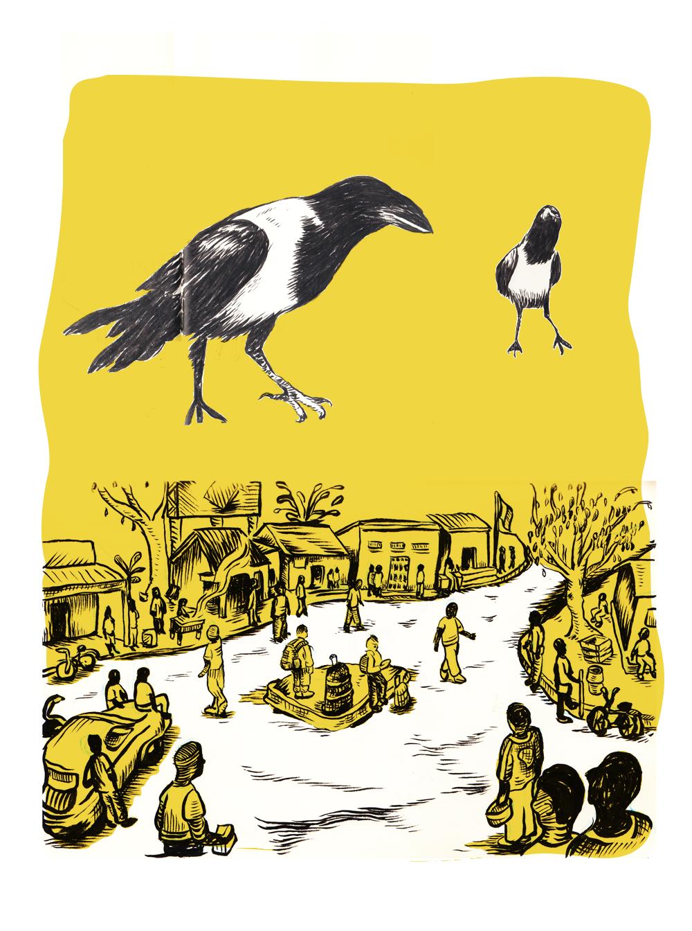 Pied Crows, Burundi