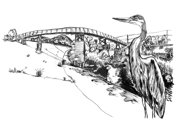 Great Blue Heron - Sunnynook Footbridge over the L.A. River, Atwater Village