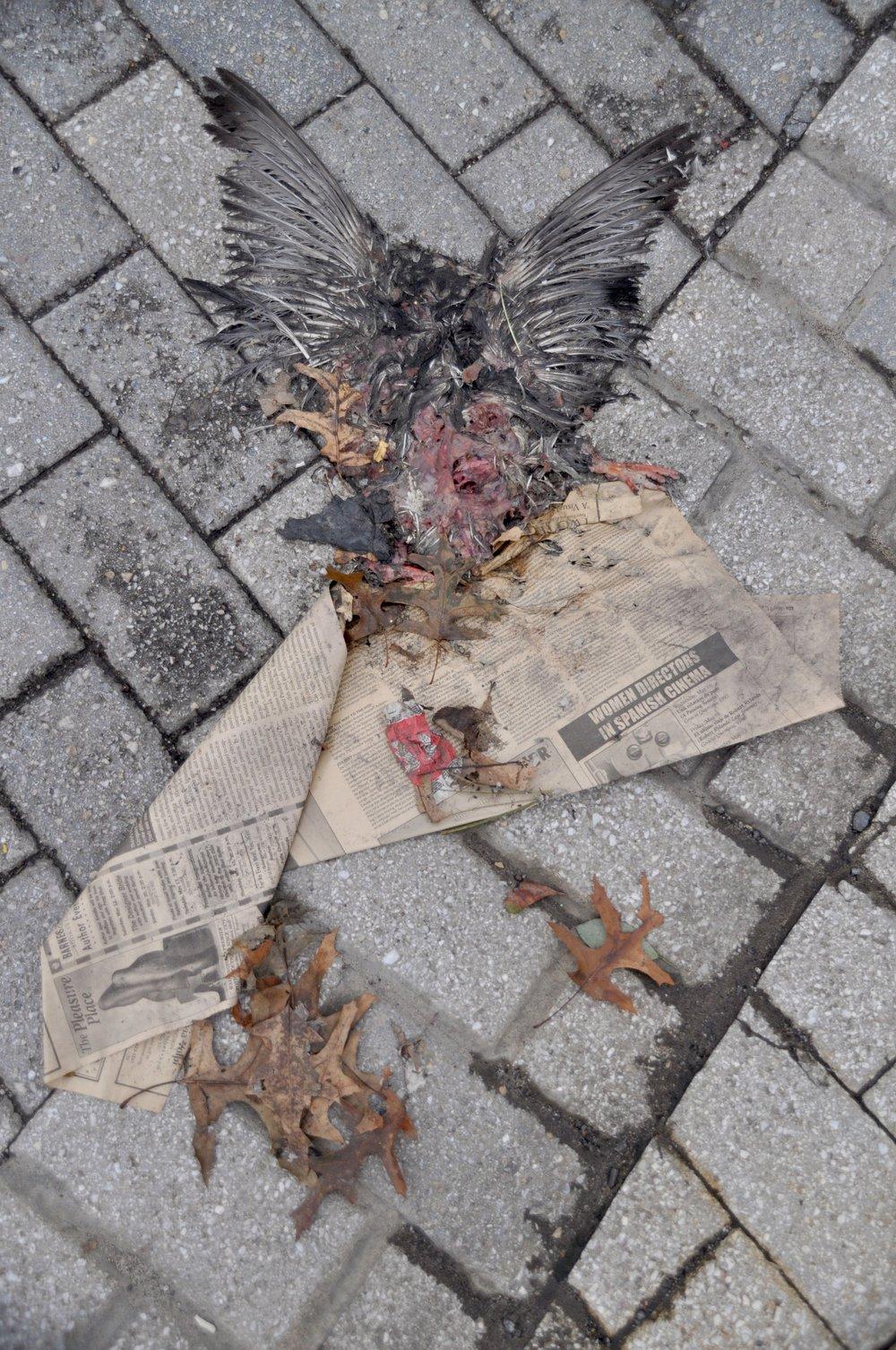 T Street Bird T.JPG