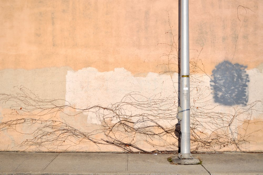 Vine Wall T.JPG