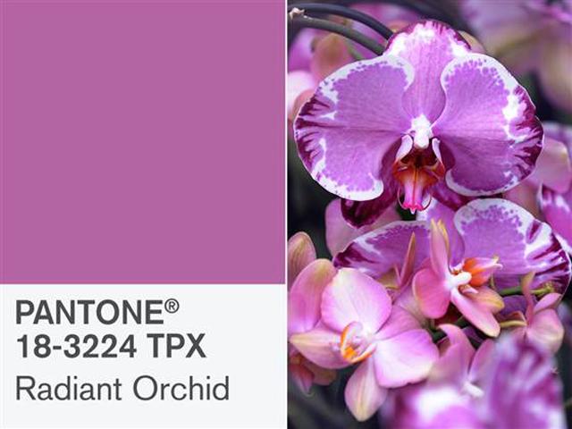 pantone-radiant-orchid