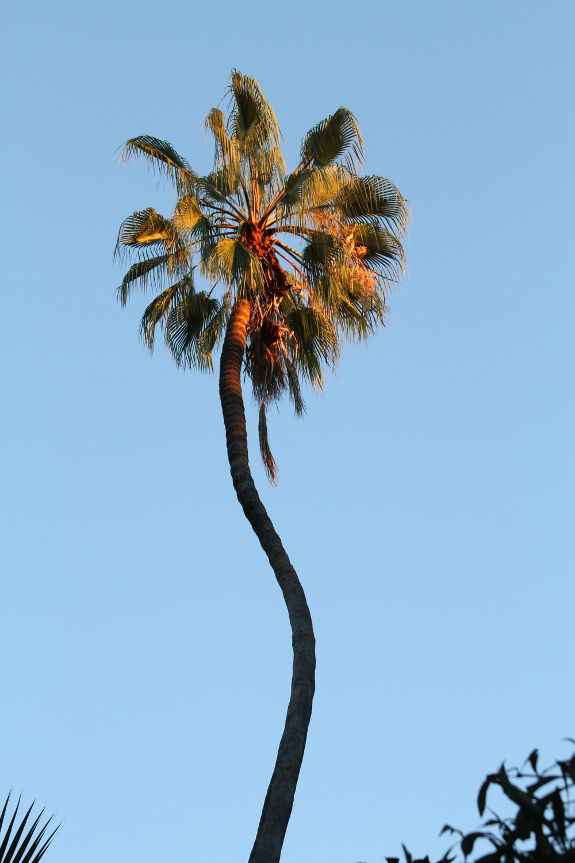 San Diego, 2015
