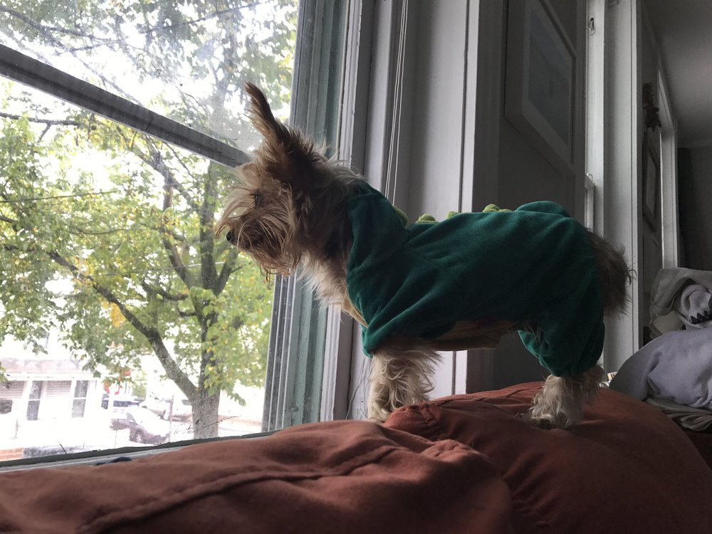 Lou, as a dinosaur, gazing out of a window.