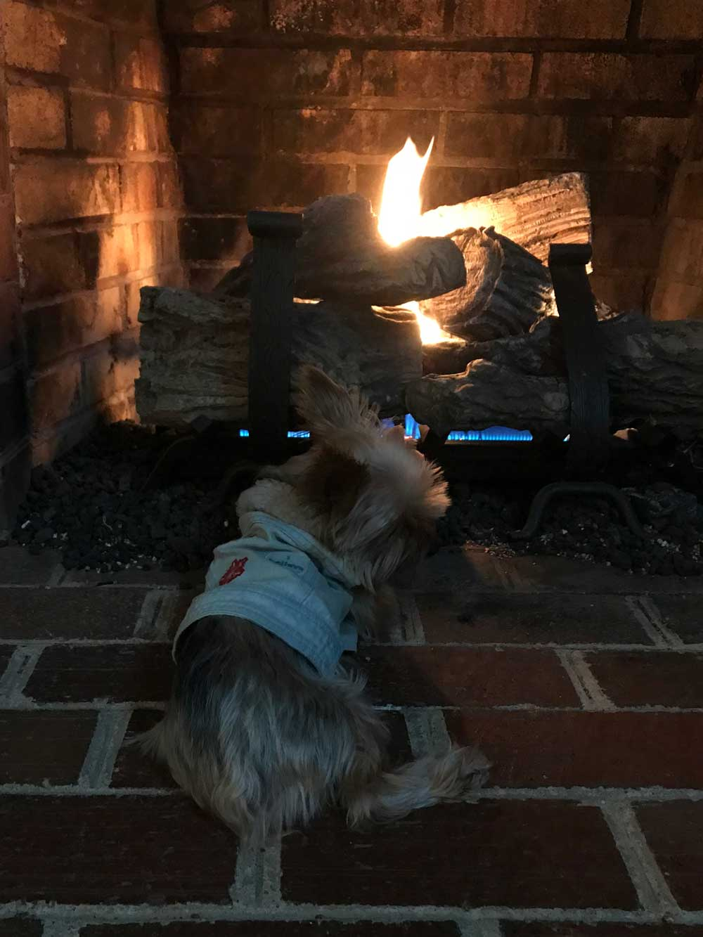 This fire is cool, but I cannot appreciate Lou's cuteness fully this way. I can barely see her