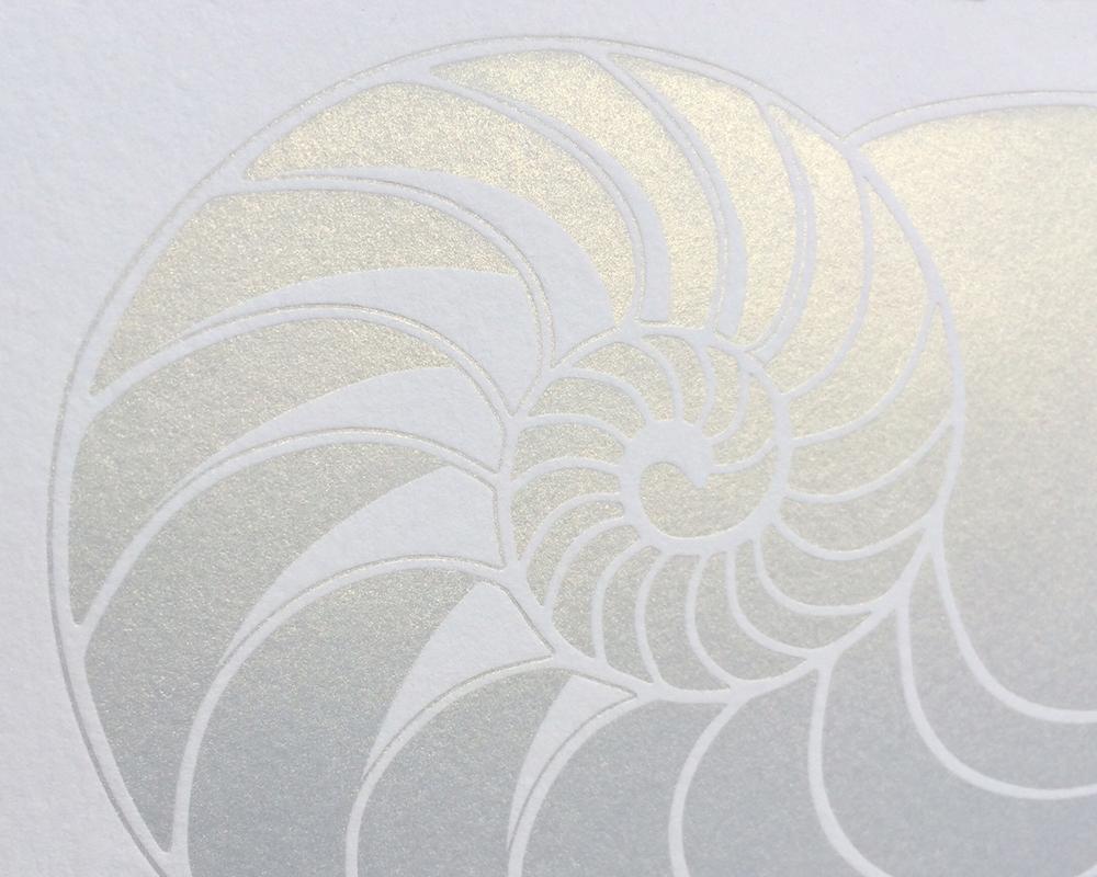 shell 4.jpg