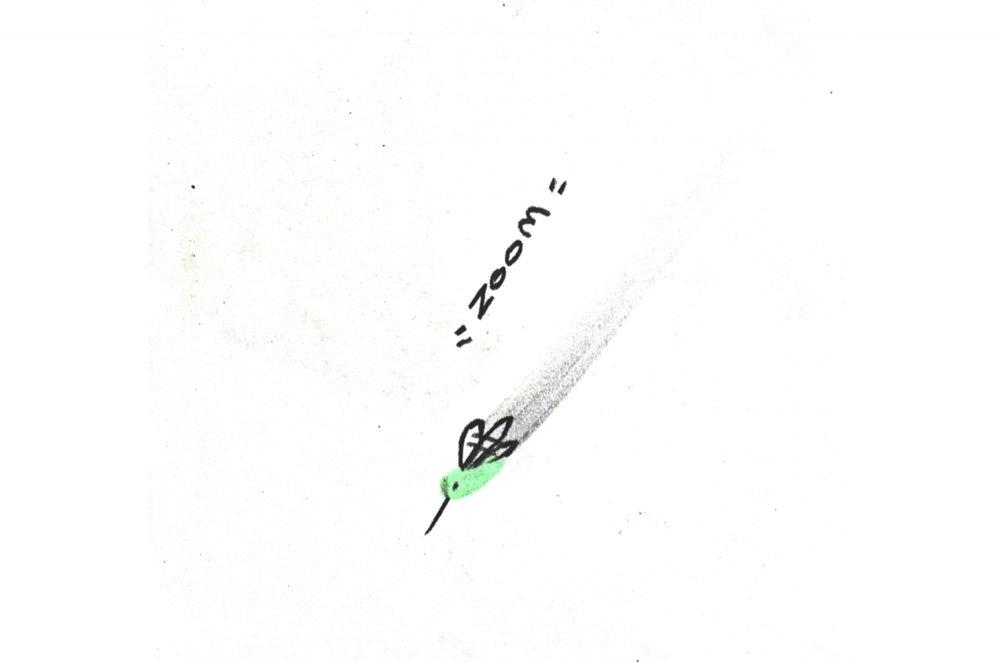 Hummingbird39.jpg