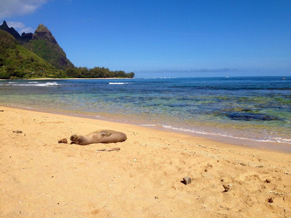 Connor+Beach+Cleanup+hawaii15.jpg