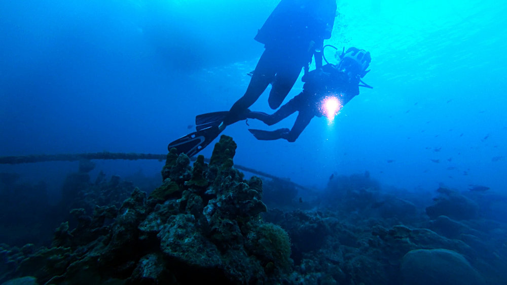 Diving - Connor views sea mound.jpg