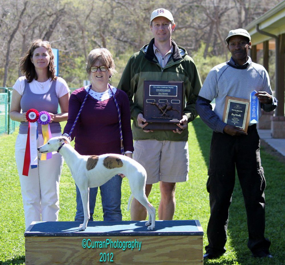 "2012 JetSet Challenge Perpetual Trophy Winner - Whippet - Belaya Sea Chanty ""Lynsea"" with Owner Sami Hirko."