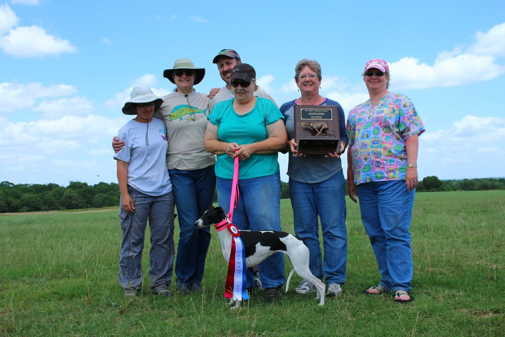 "2014 JetSet Challenge Perpetual Trophy Winner - Whippet - Debmar Wanna Go First ""Butt Patch"" with Owner Deb Bahm.  Photo Courtesy - Vincent Vu."