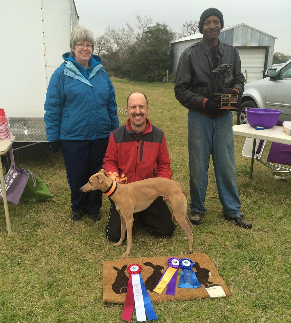 "2015 Ray Woods Challenge Perpetual Trophy Winner - Whippet - SDW Lennon's Right Imagination ""Mira"" with Owner Matt Kinch."