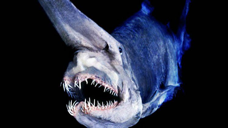 goblin-shark-mind-bomb-002.jpg